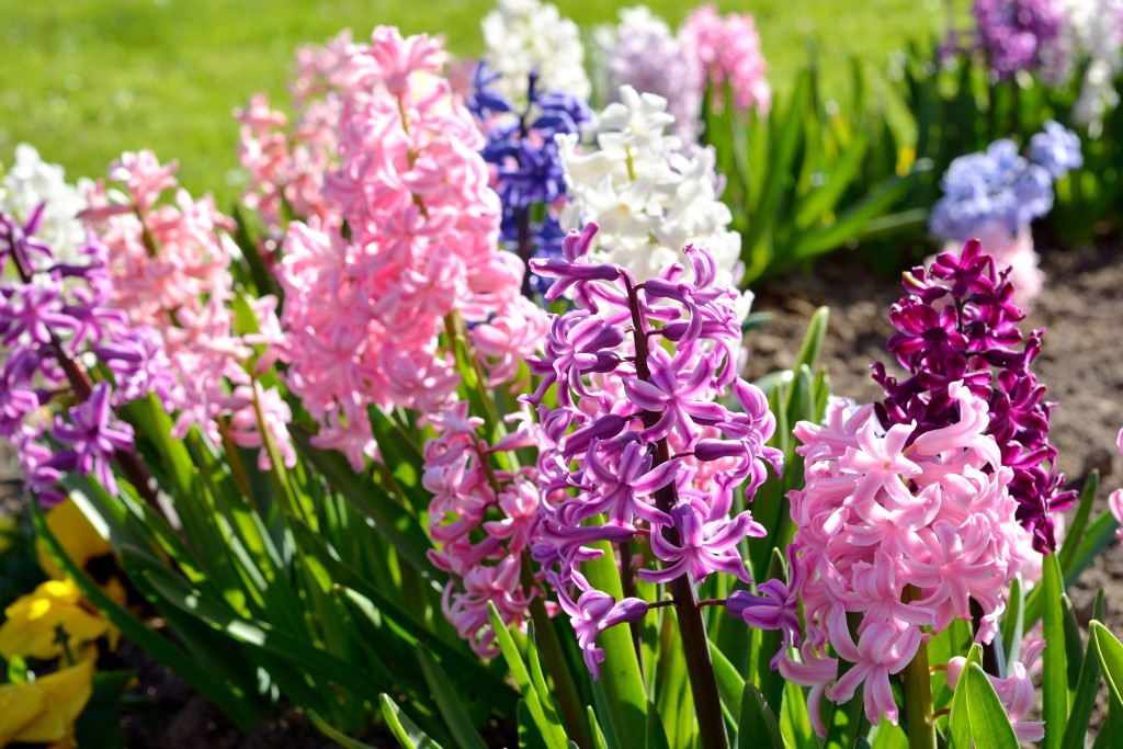The 8 Best Spring Flowering Bulbs To Plant In Autumn