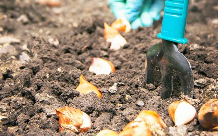 garden bulbs. Bulbs-how-to-plant-in-the-garden Garden Bulbs