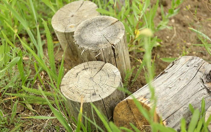garden-log-pile-wildlife-habitat