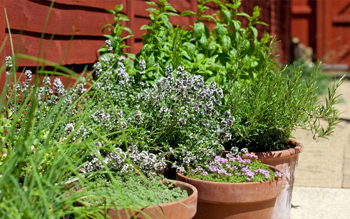 how to plant a herb garden in pots, planters and windowboxes, Natural flower
