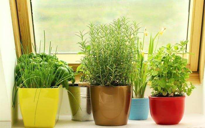 Полезные растения выращивание дома 64