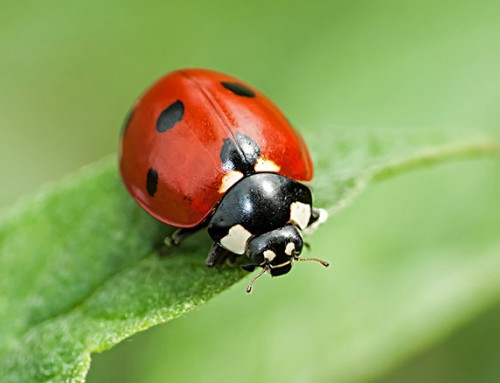 The Ultimate Garden Insect Quiz: How well do you know bugs?