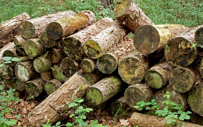 Wildlife Garden How To Build A Log Pile To Attract Insects