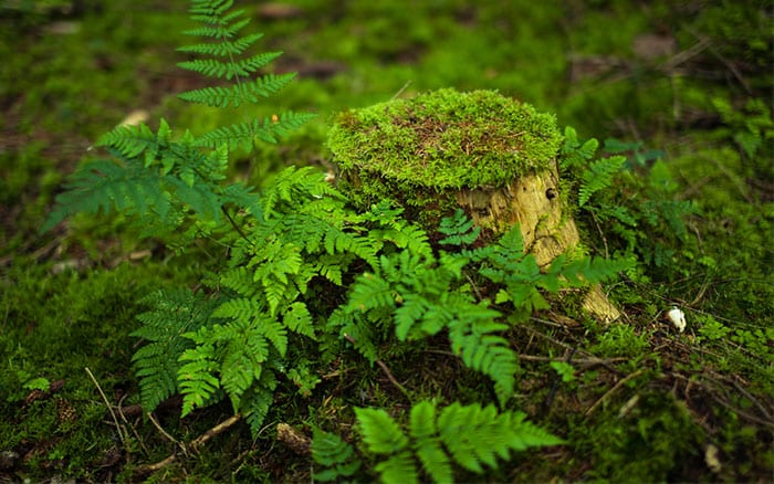 log-stump-tree-with-ferns-growing-woodland