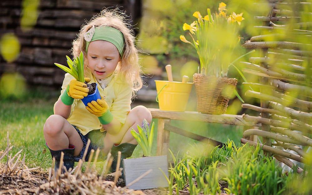 planting-spring-bulbs