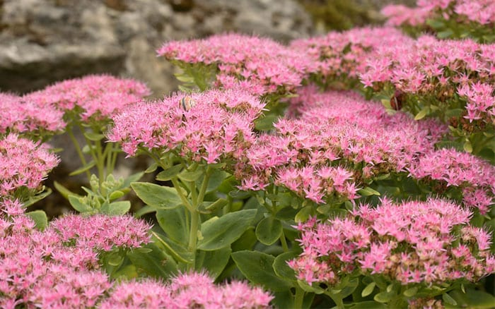 top three lateflowering plants for garden colour in september
