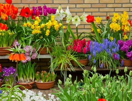 The Ultimate Flower Bulb Quiz: Fun spring bulb facts quiz