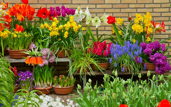 spring-bulb-containers-pots