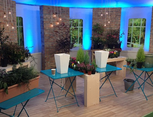 Growing perfect autumn plants and containers – ITV This Morning