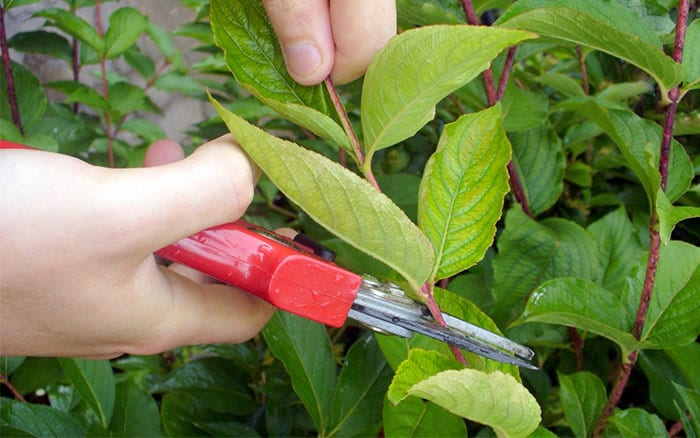 take-cutting-from-plants-propagate-garden