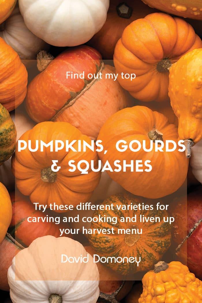 best pumpkins