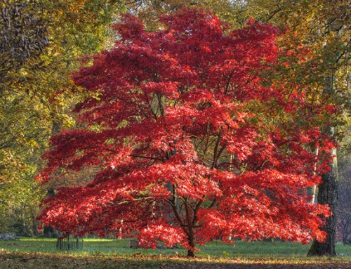 HTA Plant of the Month for November – Trees