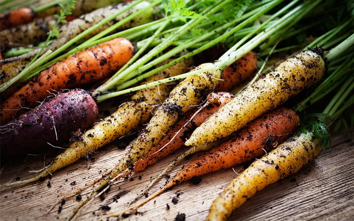 coloured varieties of carrot are great for vegetable plots, purple, yellow and cream carrots