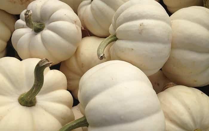 casperita-pumpkin