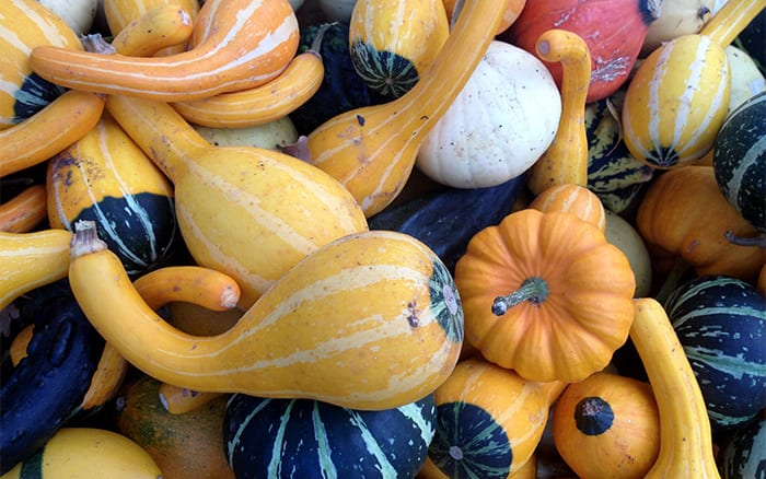 Top 12 Pumpkins Gourds And Winter Squash Varieties