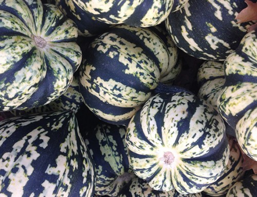 Top 12 pumpkins, gourds and winter squashes
