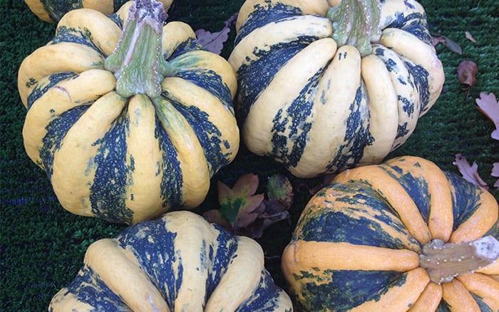 Top 12 Pumpkins Gourds And Winter Squash Varieties