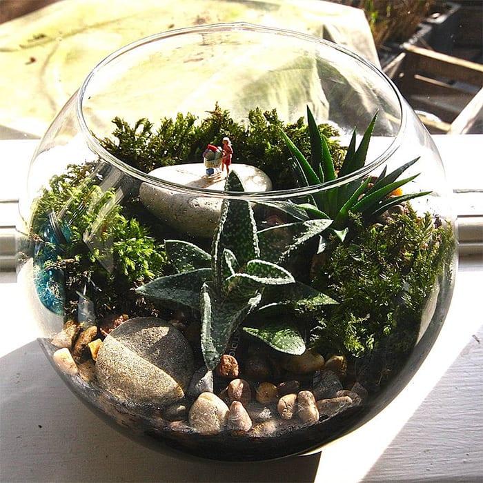 David domoney 39 s top christmas gardening gift ideas - Miniature terrarium decorations ...