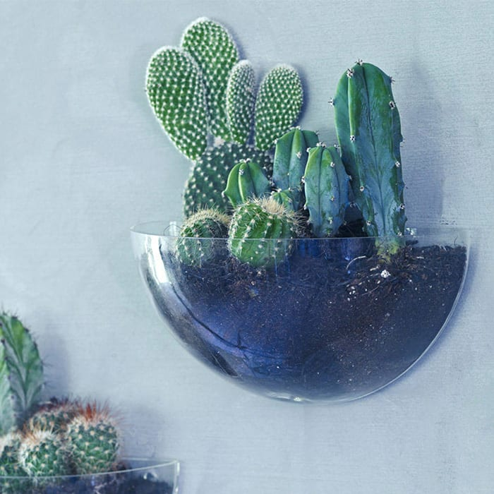 original_lovel-mini-wall-terrarium