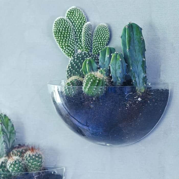 original_lovel-mini-wall-terrarium