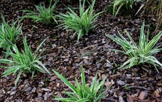 plants growing in mulch of bark chippings