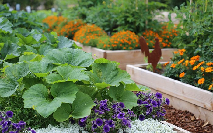 Garden Design Vegetables And Flowers how to design a potager vegetable and flower garden