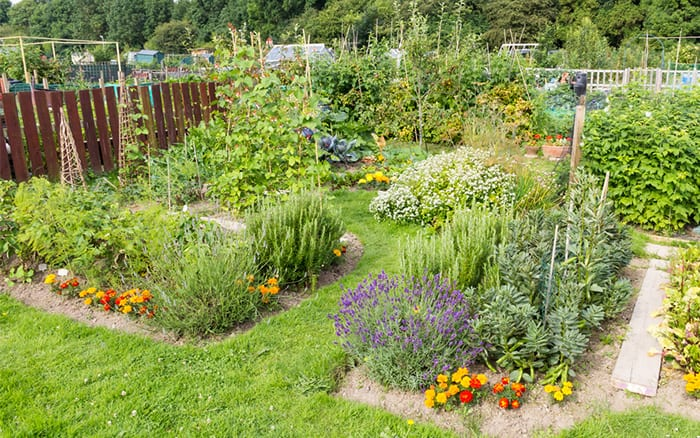 how to build a potager vegetable garden with herbs and flowers - what plants to use