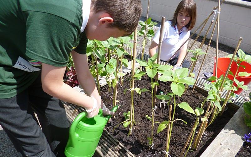 Cultivation Street 2014 Cultivation School runner up Skipton Parish school in the class crop challenge