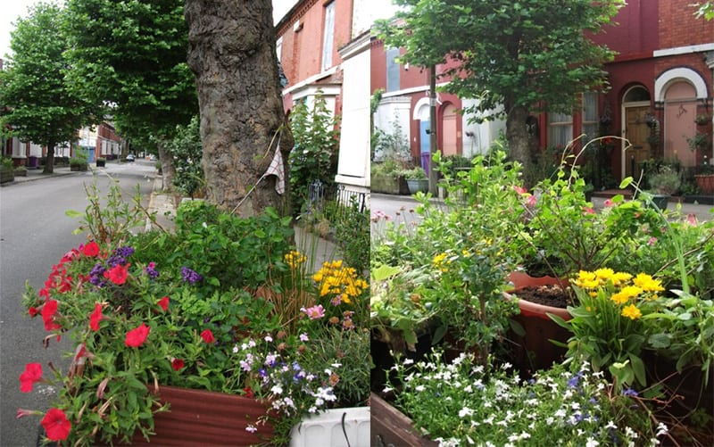 Toxteth Cultivation Street 2104 winners
