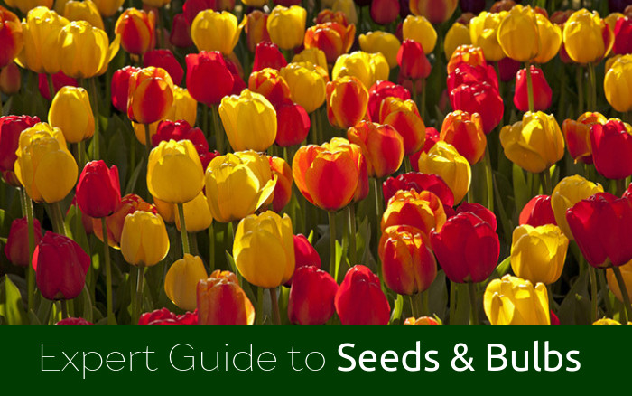 Guide to Seeds & Bulbs