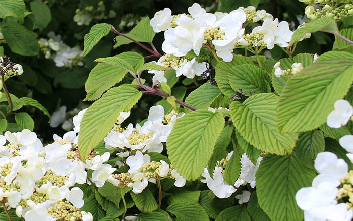 Shade garden The best climbing plants for shady garden spots