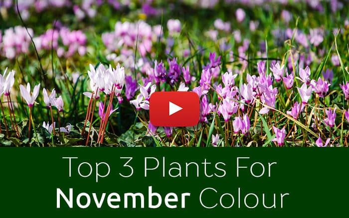 A November To Do List for Flowers and Gardens