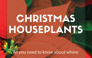 christmas houseplants