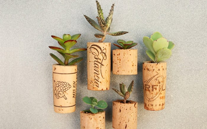 How To Make Succulent Fridge Door Cork Planters