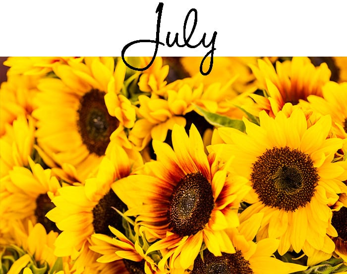 Gardening jobs for July - What are the most important gardening jobs in July