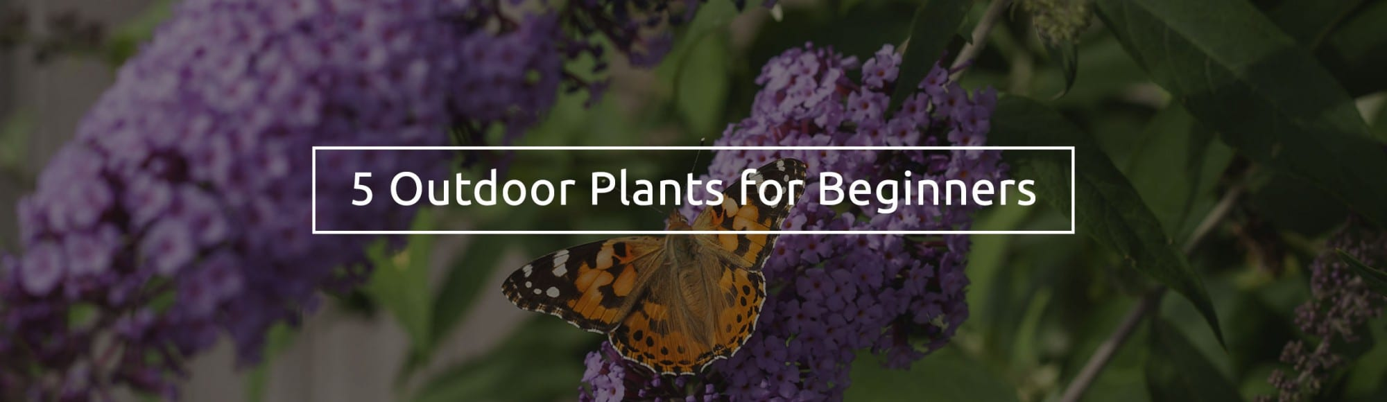 5-outdoor-plants-for-beginners