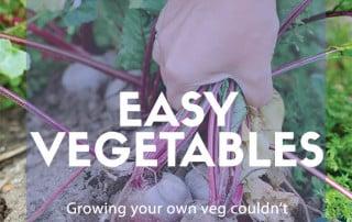 Easy vegetable plants