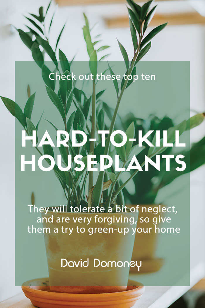 hard to kill houseplants