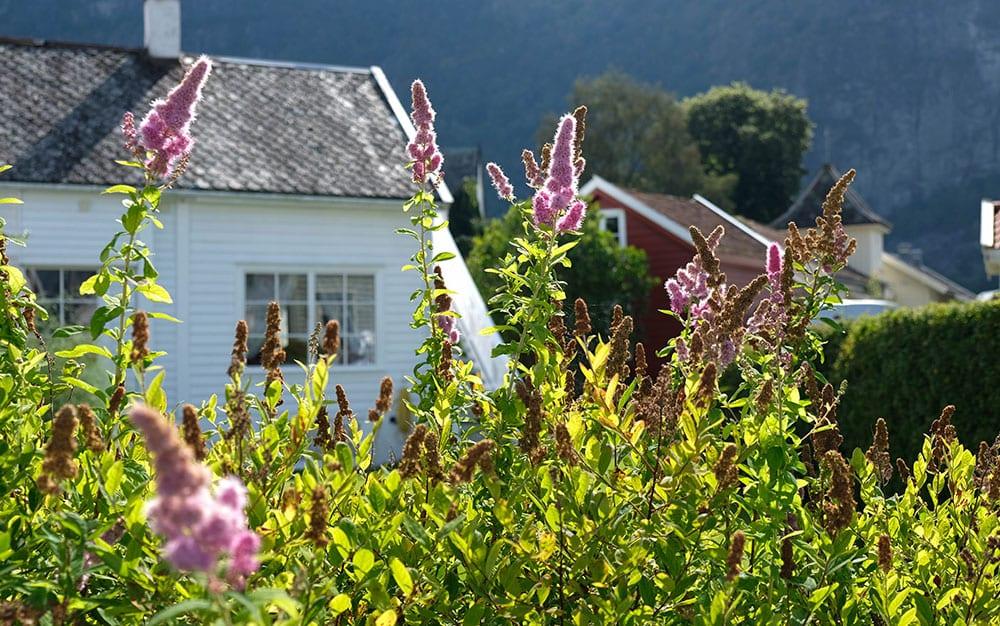 buddleja-cottage