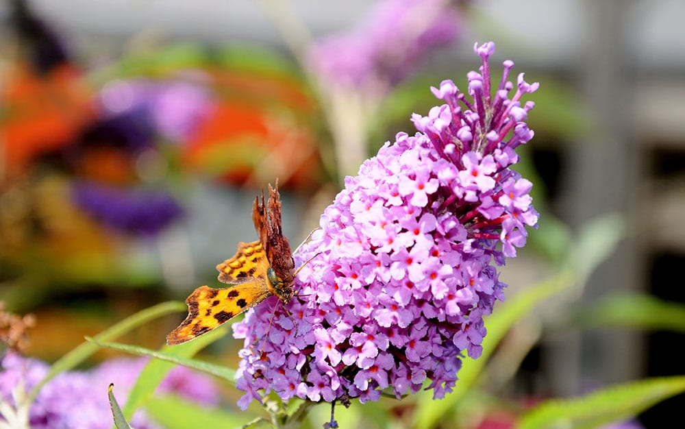 butterfly-close-up