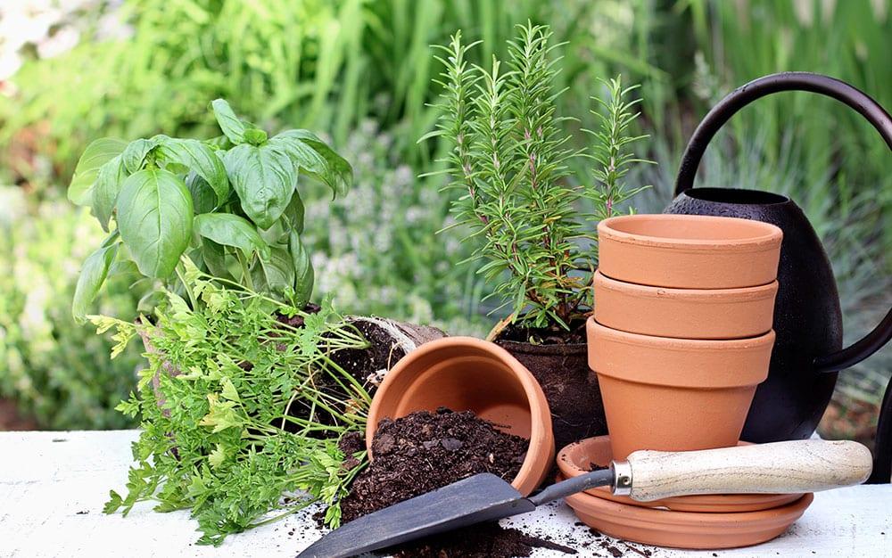 herbs-in-pots