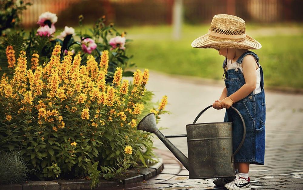 new-to-gardening