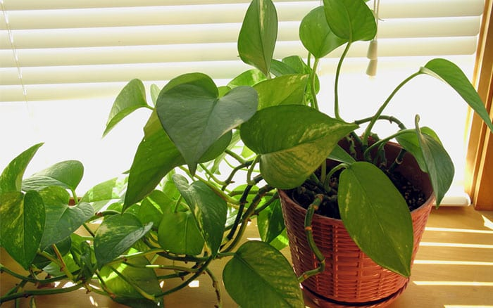 The top 10 can\'t kill houseplants for lazy gardeners