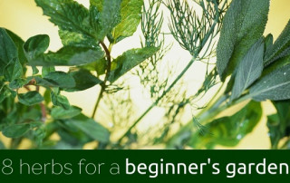 8 herbs for a beginners garden