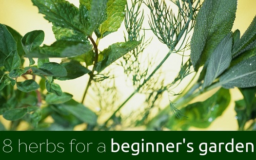 The 8 Best Herbs To Grow For A Beginner S Herb Garden