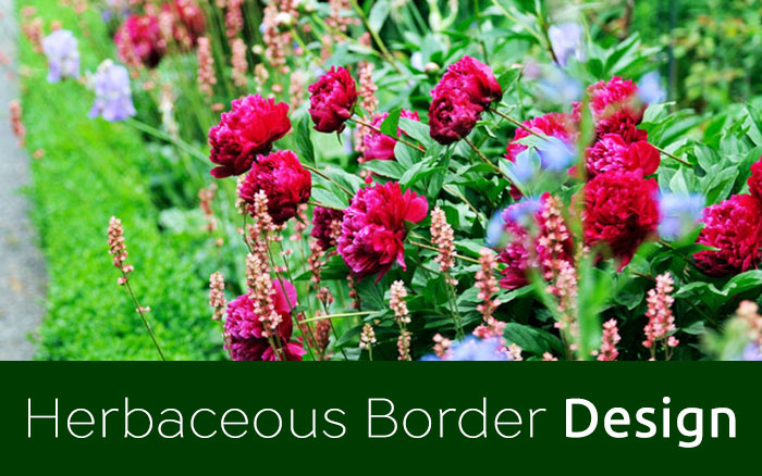 How to create a wildflower meadow in the garden for Herbaceous border design examples