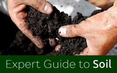 Expert guide to Soil