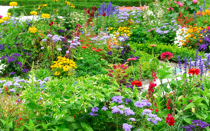 How to create a herbaceous border on a budget - Perennial flowers for borders visual gardens ...