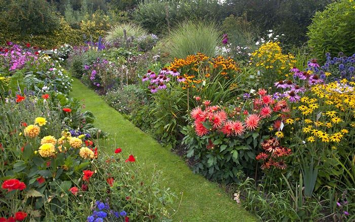 Cottage Garden Borders With Grass Path