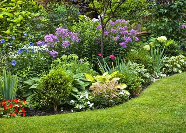How to create a herbaceous border on a budget shrubs mightylinksfo
